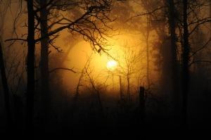 woods-183519_640.jpg