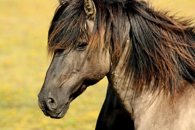 horse-337215_640